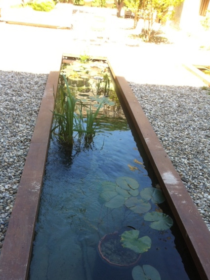 Bassin avec margelle en bois iroko